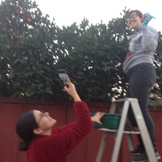 Having fun while picking fruit.